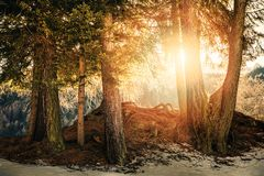 sun rays shining through tree branches Royalty Free Stock Photo