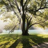 Sun rays. Shining through tree in the park, Czech Royalty Free Stock Images