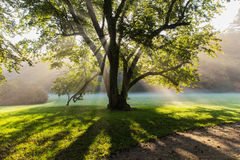 Sun rays. Shining through tree in the park, Czech Royalty Free Stock Photography