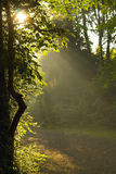 Sun rays shining through trees Royalty Free Stock Photography