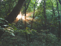 Sun rays shining in the trees Royalty Free Stock Photo