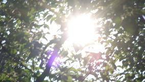 Sun rays shining through trees ,nature background stock video footage