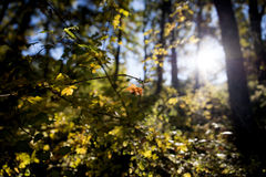 Sun rays shining through trees Royalty Free Stock Photography