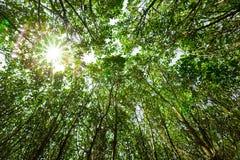 Sun rays shining through trees, Nature background Royalty Free Stock Photos