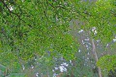 Sun rays shining through trees ,nature background. royalty free stock photo