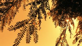 Sun rays shinning through leaves on tree