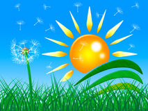 Sun Rays Shows Green Grass And Beam Stock Image