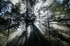 Sun rays and smoke create a mystical atmosphere in a forest Royalty Free Stock Images