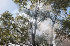 Sun rays smoke fire trees Royalty Free Stock Images