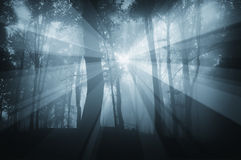 Sun rays in spooky forest with blue fog Royalty Free Stock Photos