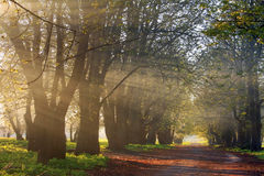 Sun rays in spring forest Stock Photography