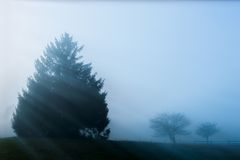 Sun rays streaking through a few trees enshrouded in fog. Royalty Free Stock Photos