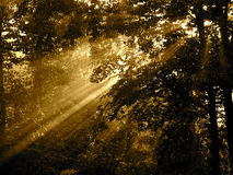 Sun rays streaming through the forest after rain Royalty Free Stock Photography