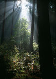Sun rays in summer forest. And wooded landscape Royalty Free Stock Photography