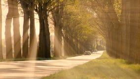Sun rays sunbeam trees silhouette background beaming light nature fantasy stock video footage