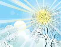 Sun rays and tree Royalty Free Stock Photography