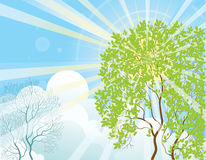 Sun rays and tree Royalty Free Stock Image