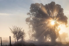 Sun rays through tree on foggy morning by country road Stock Image