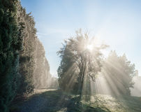Sun Rays Through the Tree Royalty Free Stock Images