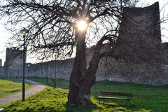 Sun rays through tree in the fortress. Stock Photo