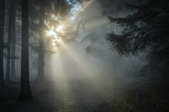 Sun Rays Through the Tree Leaves and Mist Royalty Free Stock Image
