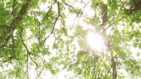 Sun rays through tree leaves stock video footage