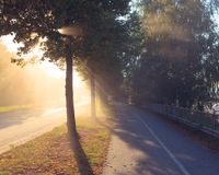 Sun rays through tree next to a road Royalty Free Stock Images