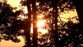 Sun rays through the trees stock video footage