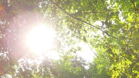 Sun rays through the trees stock footage