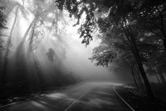 Sun rays through trees and curve road Stock Photo