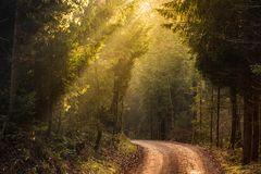 Sun rays through the trees in foggy forest. Road through the forest stock photos