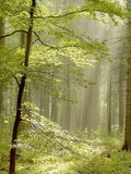Sun rays through the trees in the forest Stock Photos