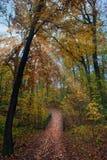 Sun rays through the trees illuminate a wooden bridge in Autumn royalty free stock photos