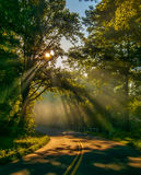 Sun rays through trees on road. Road through forest with light beams and sun rays through green trees Stock Photography