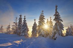 Sun rays in the trees under the snow Stock Photography