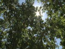 Sun rays on treetops. Sun rays breaking through treetops stock video