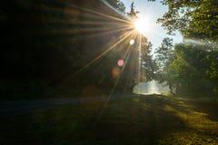 Sun rays through treetops Royalty Free Stock Image