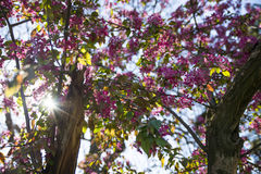 Sun rays trougt the blossom. Beautifull bloom with flowers around Stock Photos
