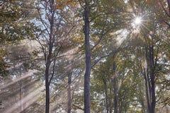 Sun rays Stock Image