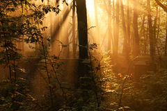 Sun rays in wall-forest Stock Photos