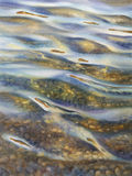 Sun rays watercolor. Sea view background. Blue sea or ocean transparent shallow water over pebble bottom of stony beach coast. Wave is incident on the beach Stock Photos