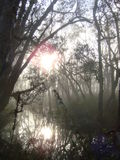 Sun rays in wetland forest Royalty Free Stock Photo