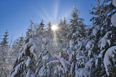 Sun rays in winter forest stock photography