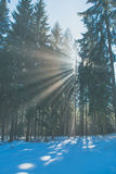 Sun rays in the winter forest Stock Photo