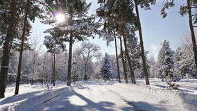 Sun Rays Winter Park Snow. Winter park on a sunny day with sun rays and sparkles after the snowfall stock video footage
