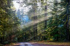 Sun rays through the woods royalty free stock image