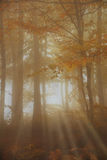 Sun rays into the woods Stock Photography