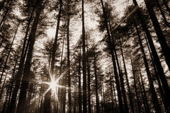 Sun rays in the woods. Radiant sun rays in the woods stock photos