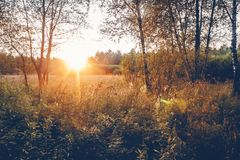 Sun Rays Through Woods Trees In Summer Forest Stock Photography