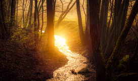 Sun reflect in water Royalty Free Stock Photography